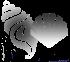 schelpjehome70x62